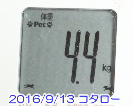 2016 09 13_1923