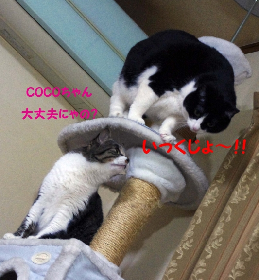 2012 01 23_1731_edited-1