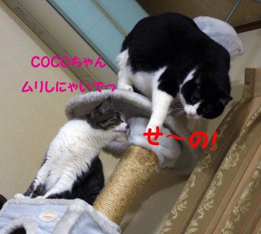 2012 01 23_1732_edited-1
