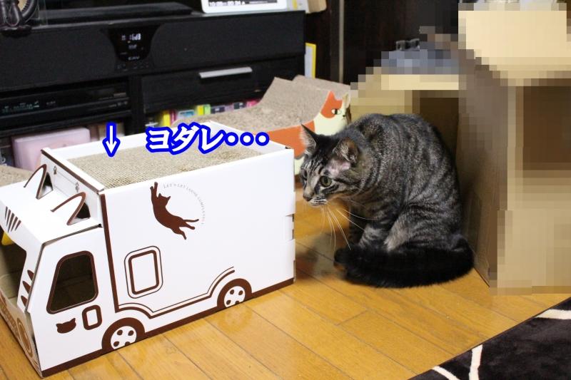 IMG_0117-1.jpg