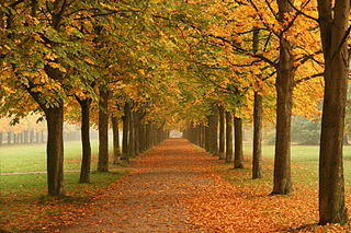 320px-Autumn_trees_in_Dresden.jpg