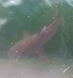 CuiihSgWcAEjK_f北谷のサメ