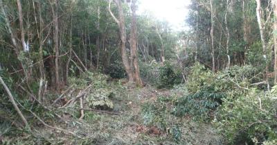 p「取り返しのつかない森林破壊」