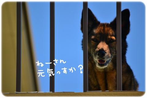五月晴れ散歩 (1)