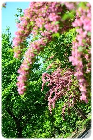 五月晴れ散歩 (3)