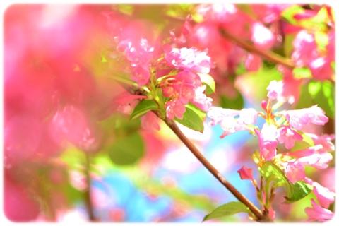 五月晴れ散歩 (6)