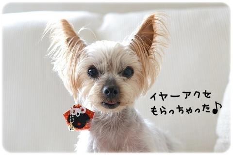 なんでも似合う (7)