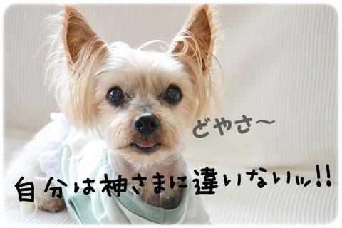 犬猫それぞれ (1)