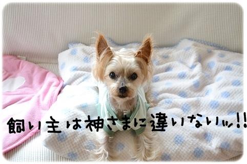 犬猫それぞれ (2)