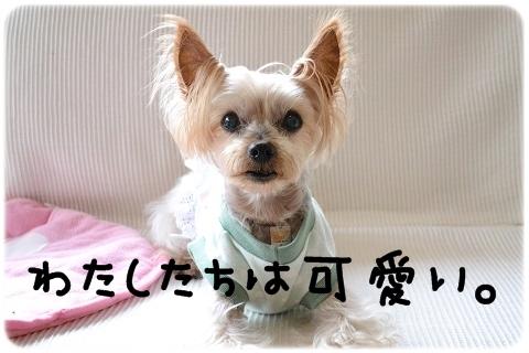 犬猫それぞれ (3)