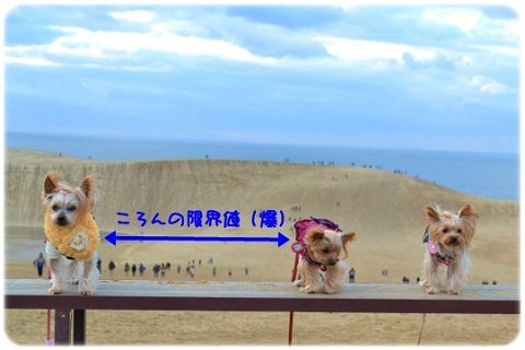風紋 (4)