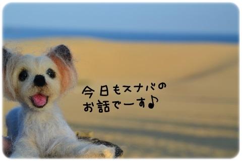 風紋 (5)
