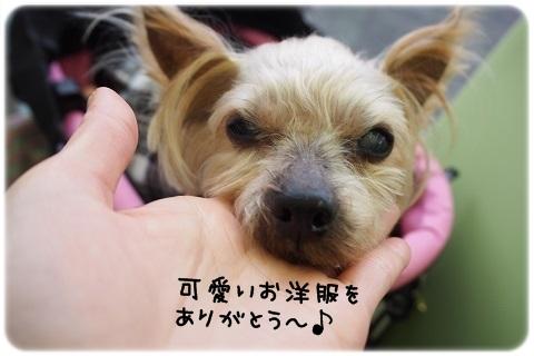 最後のお出かけ (1)