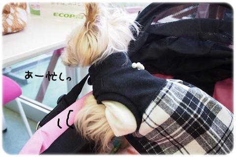 最後のお出かけ (3)