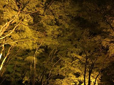 紅葉 香嵐渓 ライトアップ 豊川 花屋 花夢