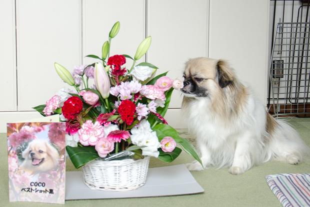 ②ココ姉ちゃんのお花だよ