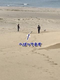 砂丘2 (14)