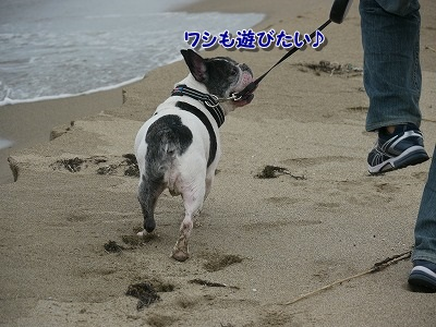 砂丘2 (3)