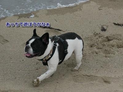 砂丘3 (2)