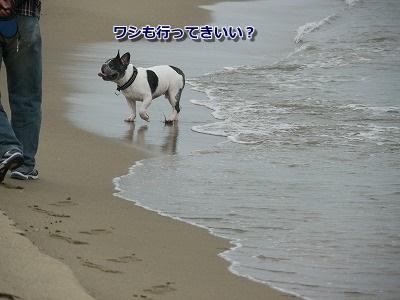 砂丘3 (3)