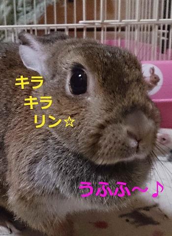 DSC_1403jyaikawaii[1]