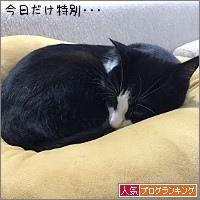 dai20161102_banner.jpg