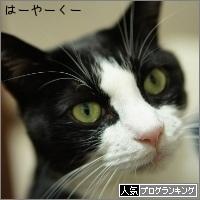 dai20161104_banner.jpg