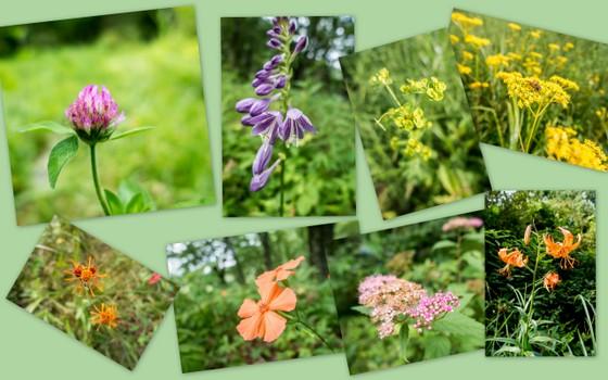 榛名湖畔に咲く花たち