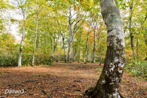 奥利根水源の森キャンプ地
