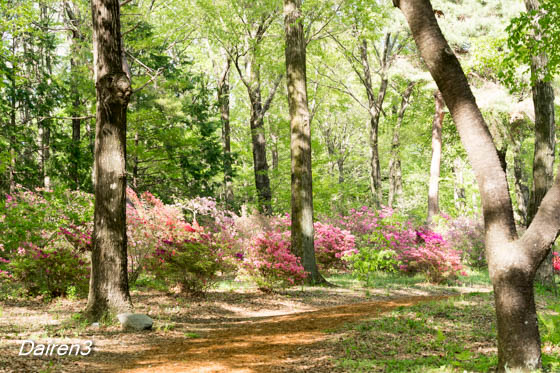 赤城自然園 ツツジの丘