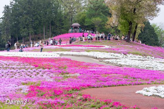 箕郷芝桜祭り