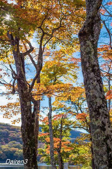 赤城大沼の紅葉