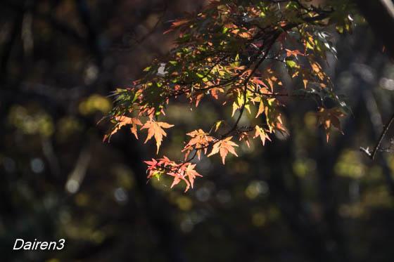 伊香保上ノ山公園の紅葉