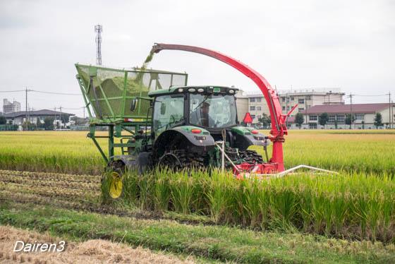 飼料用稲の収穫