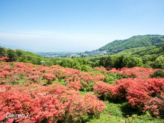 伊香保長峰公園のツツジ