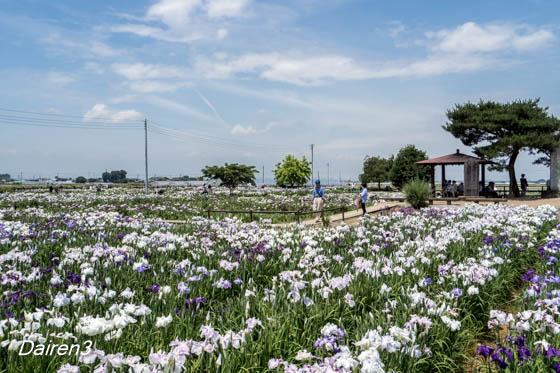 菖蒲城跡あやめ園