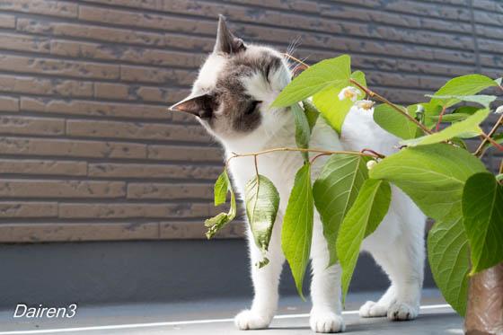 猫とマタタビ