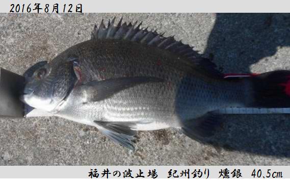 20160812fukui400.jpg