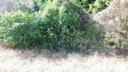16-10-23柿と梅木前