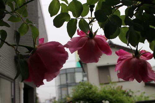 IMG_8841.jpg