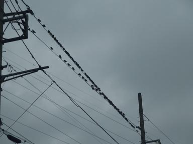 8-15鳥1f