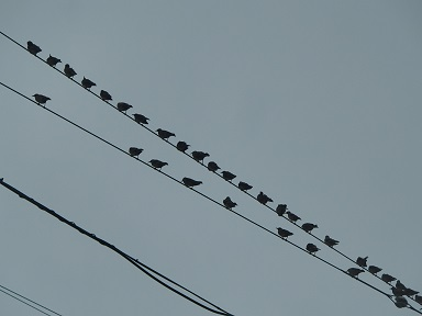 8-15鳥2f