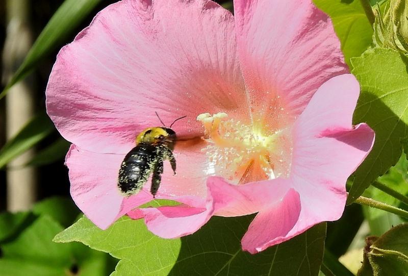 クマバチ2z