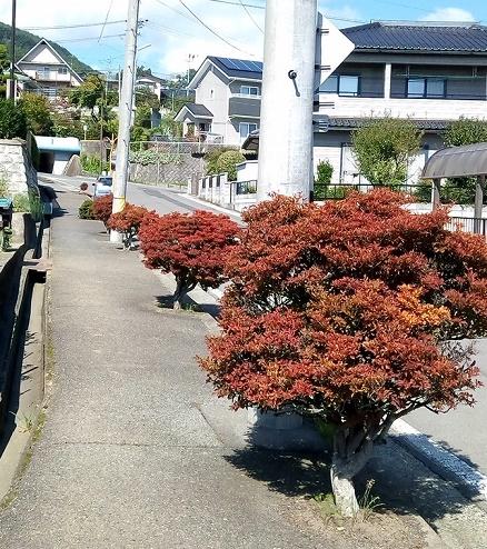 盆栽植え込み (3)