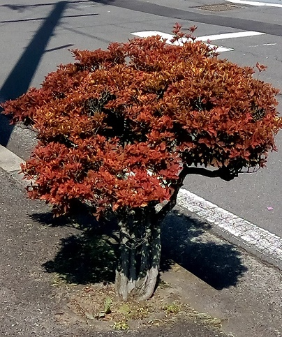 盆栽植え込み (1)