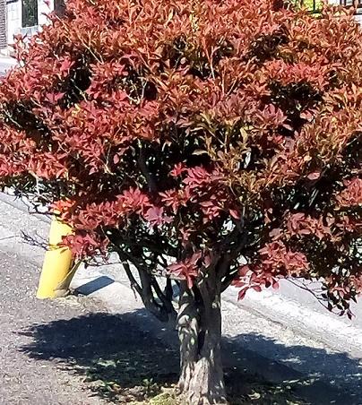 盆栽植え込み (2)