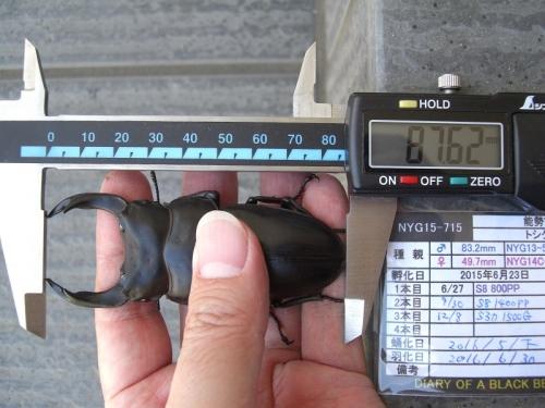CIMG8735加工済み