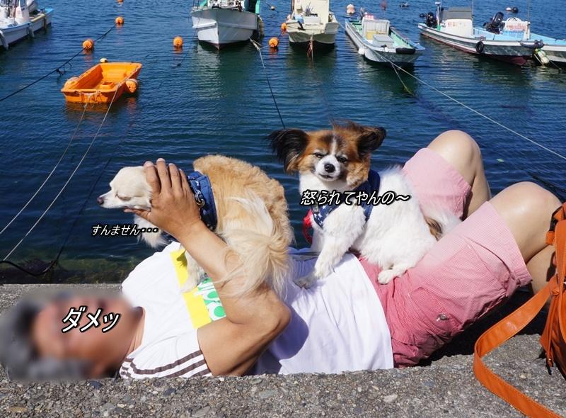 DSC02346_20160612163440cd0.jpg