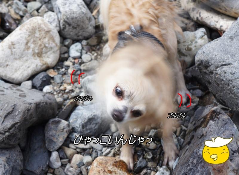 DSC02364_20160715160911ddc.jpg
