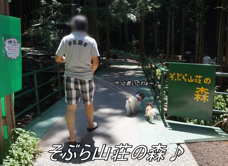 DSC04775_20160801161943754.jpg